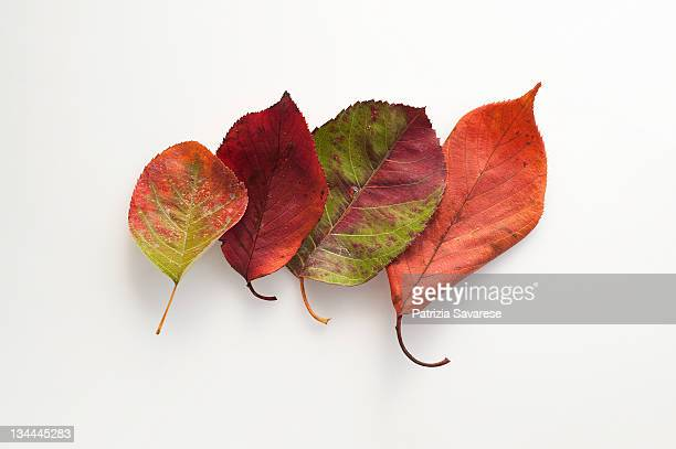 Various colored autumn leaves