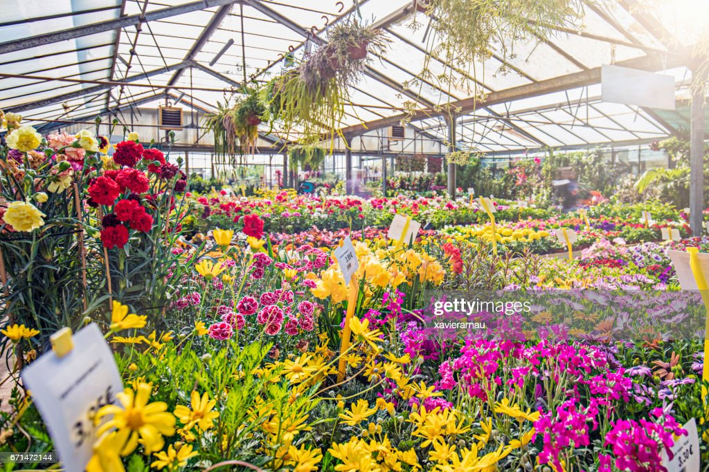 Various colorful flowers growing in garden center : Stock Photo