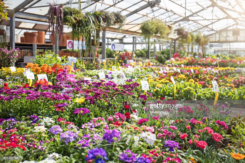Various colorful flowers growing in plant nursery : Stockfoto