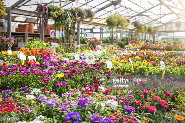 Various colorful flowers growing in plant nursery