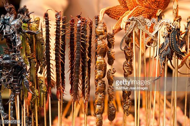 Various cooked insects thread on skewers