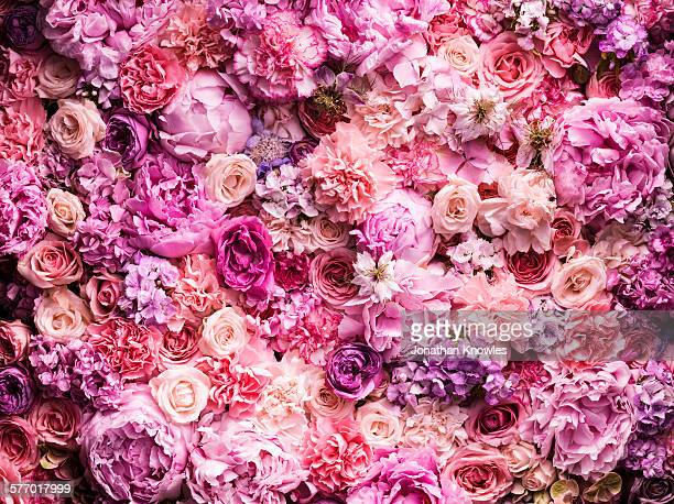 various cut flowers, detail - pink flowers stock pictures, royalty-free photos & images