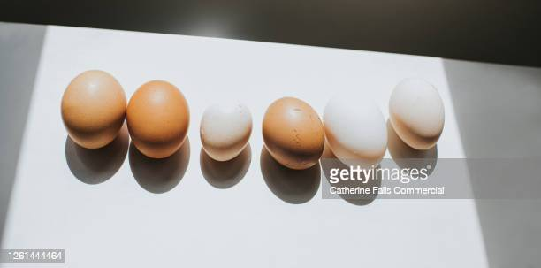 various eggs in a row, casting shadow on white surface - egg stock pictures, royalty-free photos & images