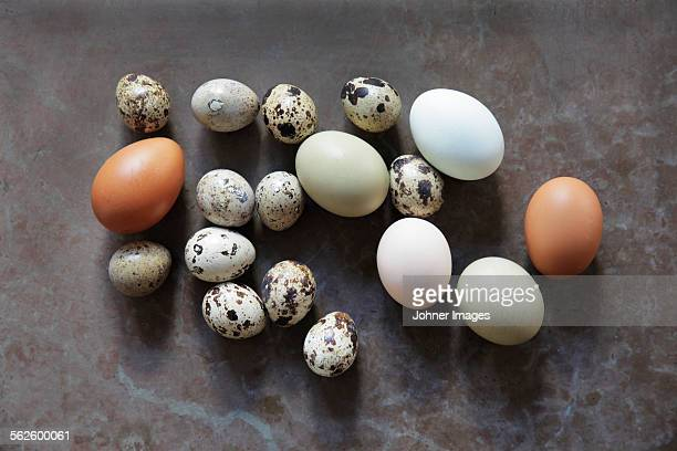 Various eggs, studio shot
