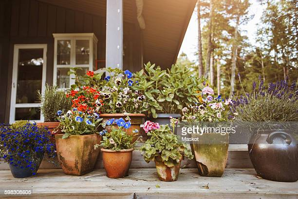 various flower pots at yard - pot plant stock pictures, royalty-free photos & images