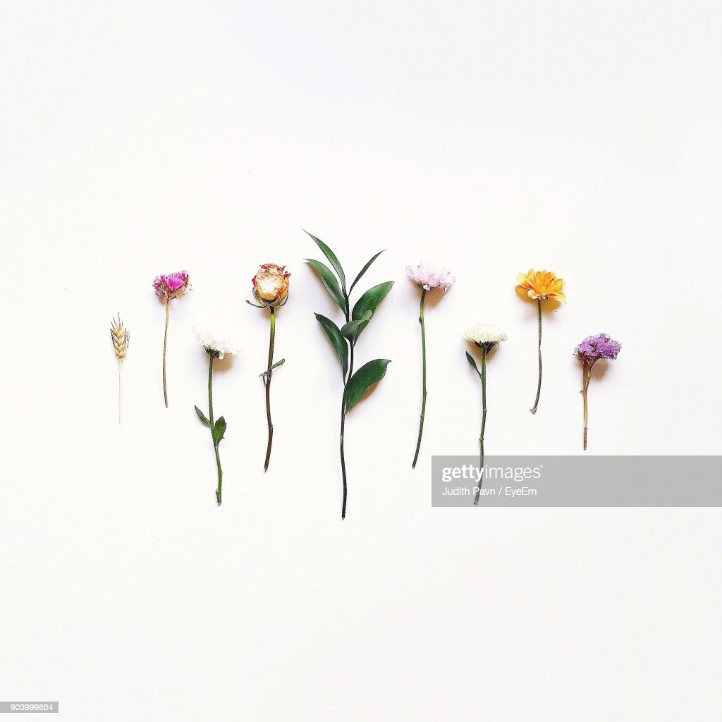 Various Flowers Over White Background : Stock-Foto
