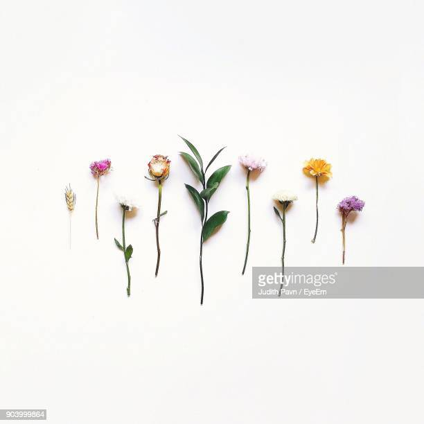 Various Flowers Over White Background
