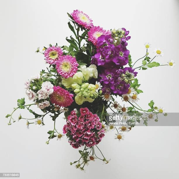 Various Fresh Flowers Against White Background