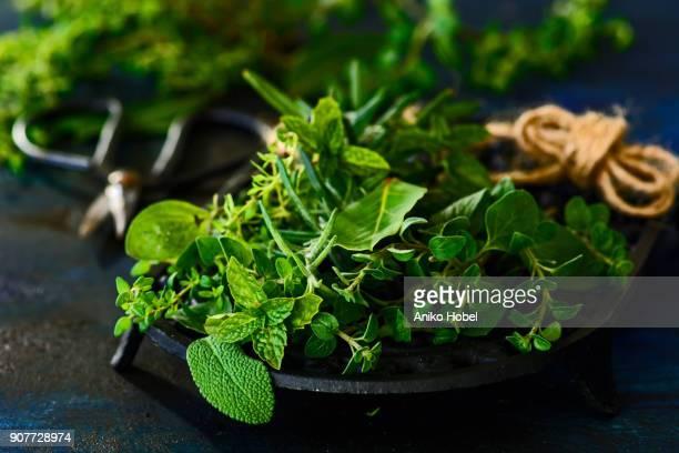 various fresh herbs - erbe aromatiche foto e immagini stock