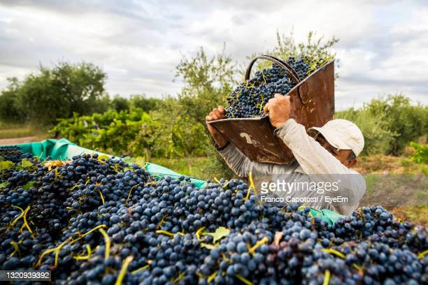 various fruits in basket on field against sky - argentina stock pictures, royalty-free photos & images