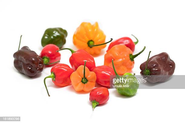 Various habanero chili peppers