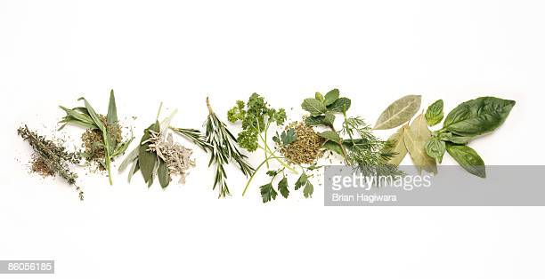 various herbs - erbe aromatiche foto e immagini stock