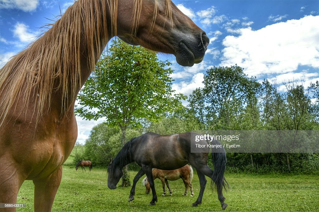 Various Horses Grazing On Field Against Cloudy Sky : Stock Photo
