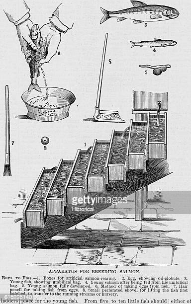 Various implements for the successful breeding of salmon were invented by Gehin and Remy in France The boxes are used for the artificial rearing of...