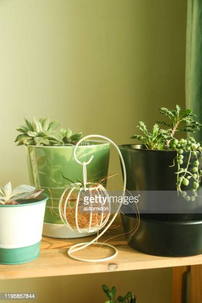 various indoor houseplants in various pots on a wooden shelf - bamboo plant stock pictures, royalty-free photos & images