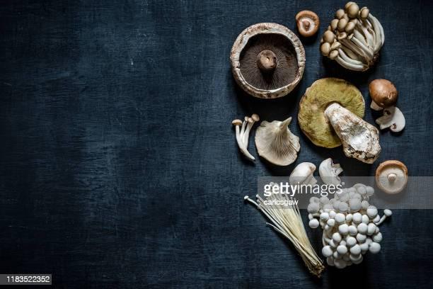 various kinds of edible mushrooms - enoki mushroom stock pictures, royalty-free photos & images