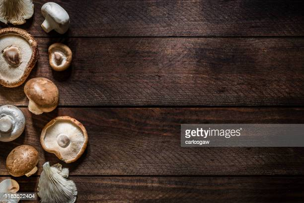 various kinds of edible mushrooms with copy space - shiitake mushroom stock pictures, royalty-free photos & images