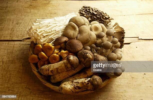 Various Kinds of Mushroom