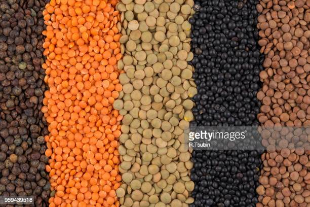 various legumes - red, black, yellow, green, brown lentils - legume family stock pictures, royalty-free photos & images