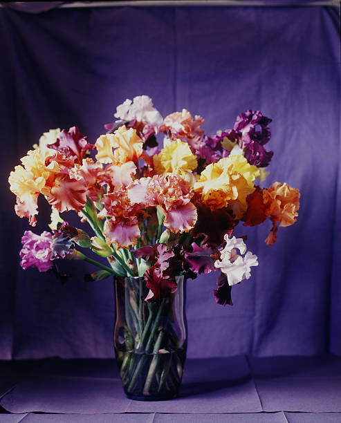 Various multi-colored irises in a vase.