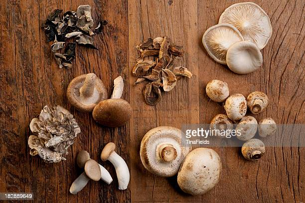 various mushrooms used on cooking - shiitake mushroom stock pictures, royalty-free photos & images