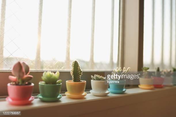 various of succulents and house plants - kyonntra stock pictures, royalty-free photos & images