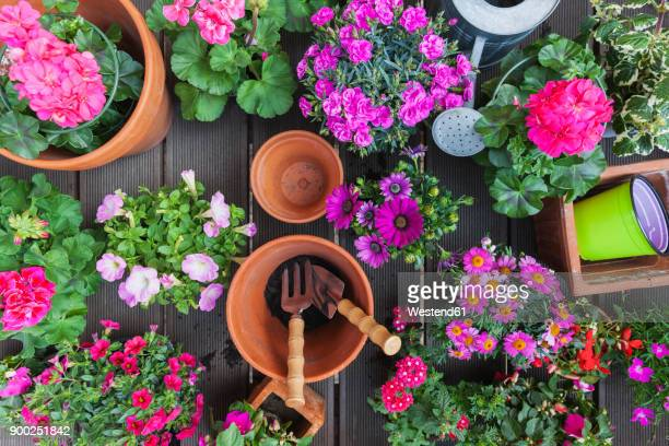 Various pink blooming potted plants on terrace