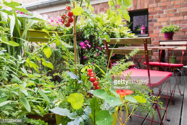 various plants cultivated in balcony garden - balcony stock pictures, royalty-free photos & images