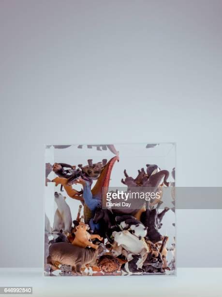 Various plastic animals in a perspex cube