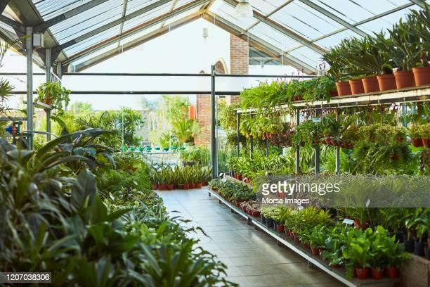 温室に配置された様々な鉢植え植物 - 植物園 ストックフォトと画像