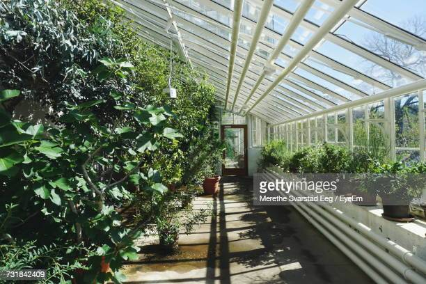 Various Potted Plants In Greenhouse