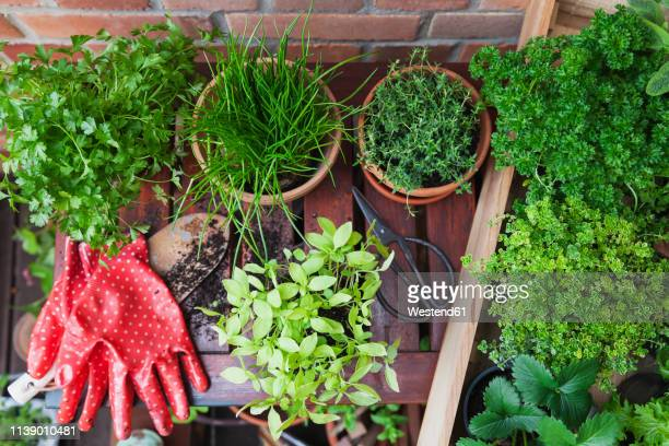 various potted spice plants on terrace - balcone foto e immagini stock