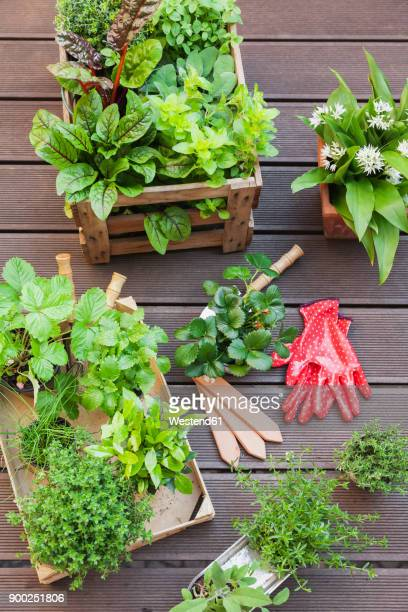 various potted spice plants on terrace - box container stock pictures, royalty-free photos & images