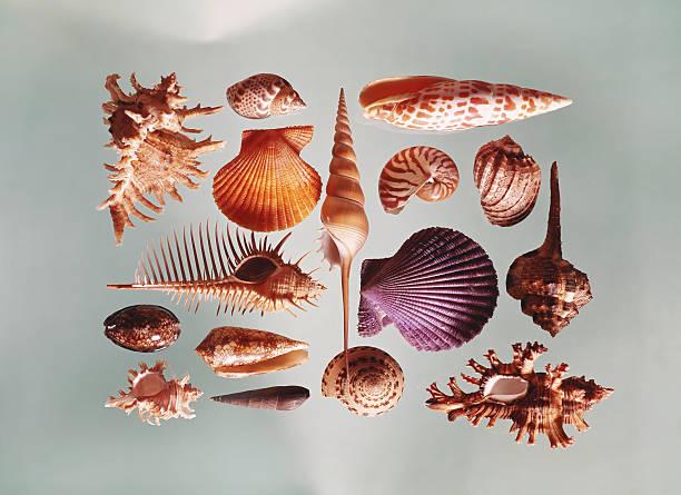 Various Sea Shells On Grey Background Wall Art