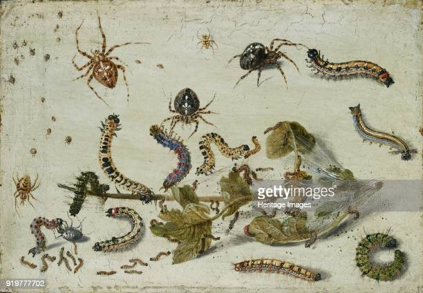 Various Spiders and Caterpillars, with a Sprig of Gooseberry, early 1650s. Artist Jan van Kessel.
