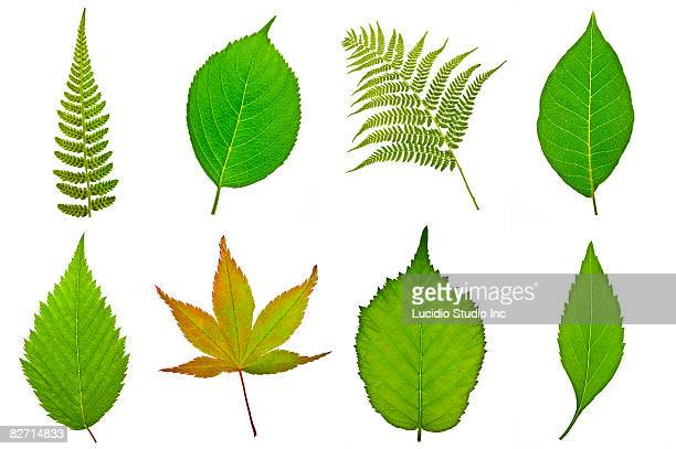 Various tree and fern leaves