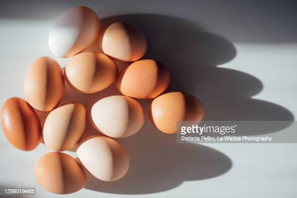 various types, colours, and shades of eggs, casting shadows on a clean white surface. conceptual with space for copy. - 卵白 ストックフォトと画像