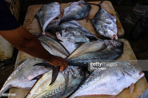 LHOKSEUMAWE ACEH INDONESIA Various types of fish seen display in the traditional markets of Lhokseumawe City The Indonesian government raised its...