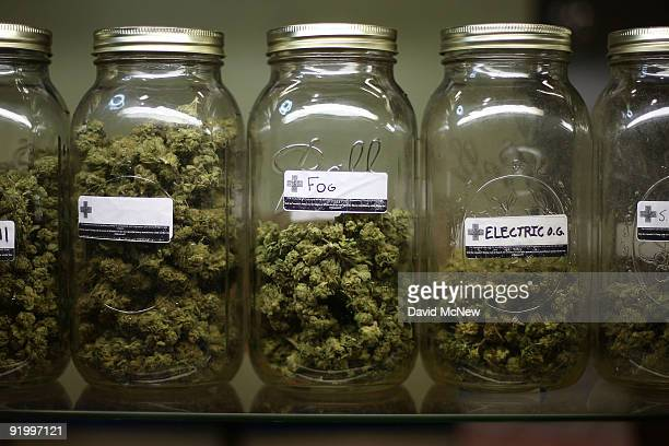 Various types of marijuana are on display at Private Organic Therapy a nonprofit cooperative medical marijuana dispensary on October 19 2009 in Los...