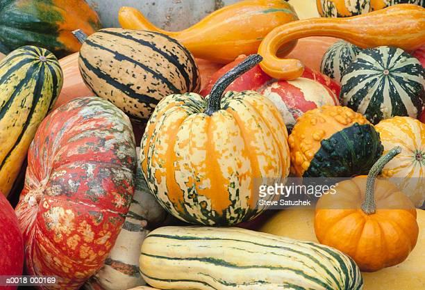 various types of squash - gartenkürbis stock-fotos und bilder