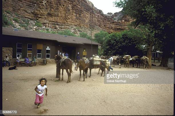 Various views of the country's last mule mailtrain making it's daily 16 mile round trip through the Grand Canyon to the Native American village of...