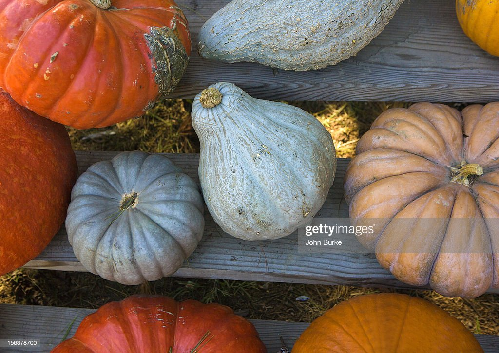 varities of squash : Stock Photo