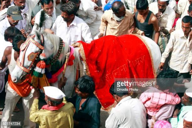 Varkari worshiping horse in Pandharpur on occasion of Ashadhi Ekadashi, district Solapur, state Maharashtra, India