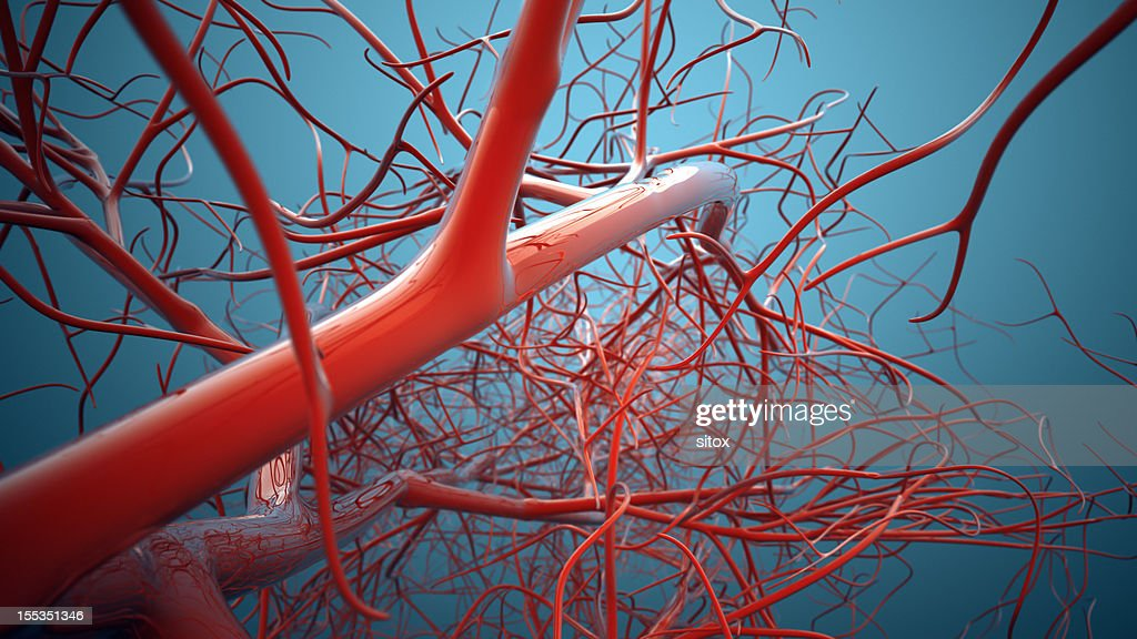 Vascular System, Veins : Stock Photo