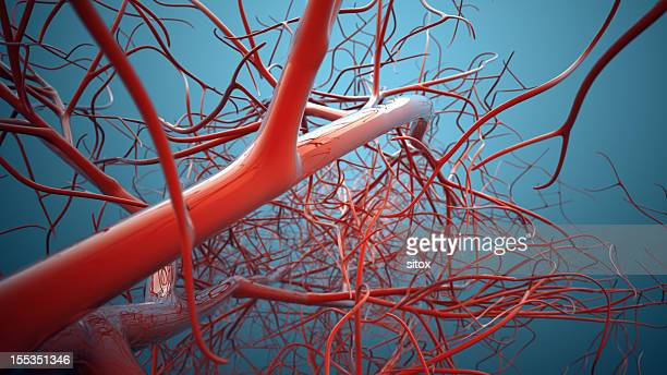 vascular system, veins - limb body part stock pictures, royalty-free photos & images