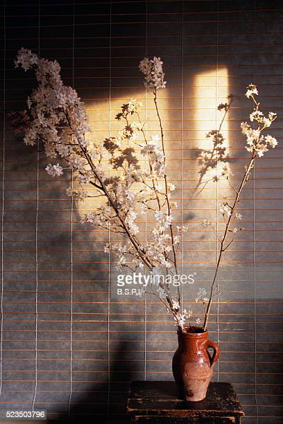 Vase of Cherry Blossoms Before Paper Screen
