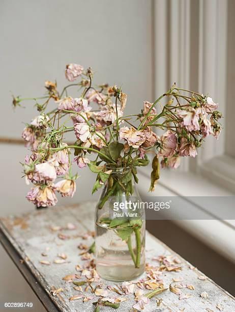 Vase of dead pink roses