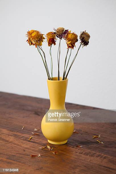 A vase of dried flowers