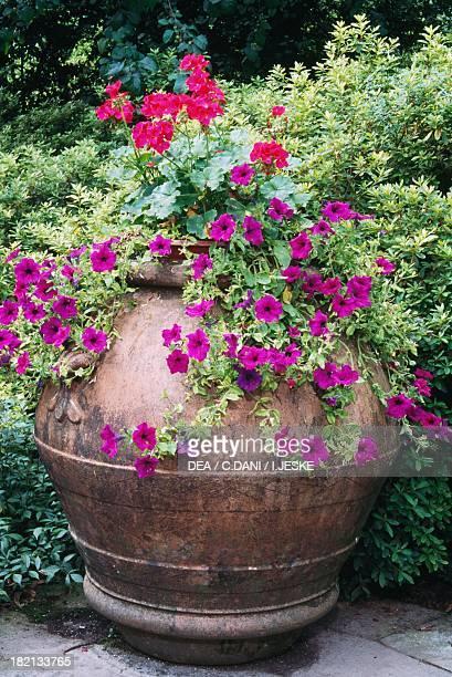 Vase of geraniums and petunias