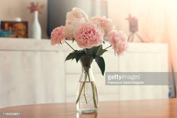 vase of peonies - still life foto e immagini stock